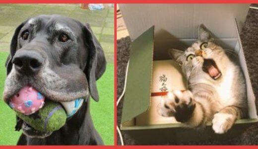 【腹筋崩壊】動物たちのシュールな画像10選wwwどうしてそうなったwww