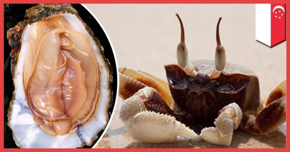 【閲覧注意】カニが女性の局部を牡蠣と間違えてしまい……これはシャレにならん……