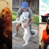 【涙腺崩壊】長く離れていた犬と飼い主が再会する瞬間20選。動物との間に生まれた絆は深く美しい…。
