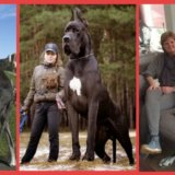 【超絶悲報】50代のおじいちゃんが飼ってる大型犬が2頭で赤ちゃんを噛み殺してしまう……犬の嫉妬か