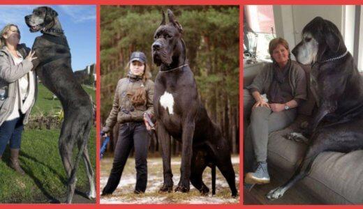【超絶悲報】50代のおじいちゃんが飼ってる大型犬が2頭で赤ちゃんを噛み殺してしまう……【犬の嫉妬か】