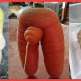 【卑猥に見える野菜】思わずクスっと笑っちゃう画像5連発!!