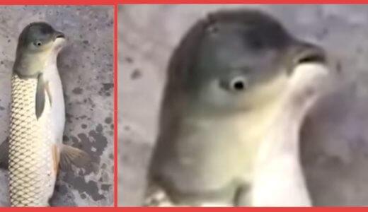 【奇形】中国でペンギンに激似の珍魚が発見される!!その正体はなんと〇〇の〇〇だった……