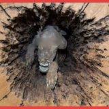 【閲覧注意】林業の男性が木を切ったらその中には衝撃の光景が。それはミイラ化した〇〇でした…